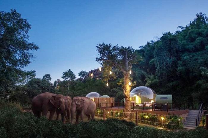 bolhas com elefantes 2