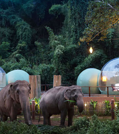 Neste hotel os hóspedes dormem em bolhas na selva em meio a elefantes resgatados
