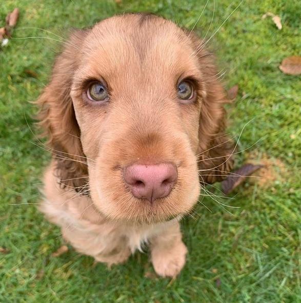 cachorrinha olhos azuis 3