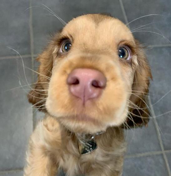 cachorrinha olhos azuis 6