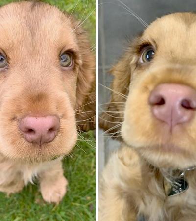A adorável cachorrinha que conquistou a internet com seus belos olhos