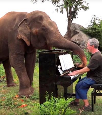 Elefante cego dança sempre que pianista toca sua música favorita