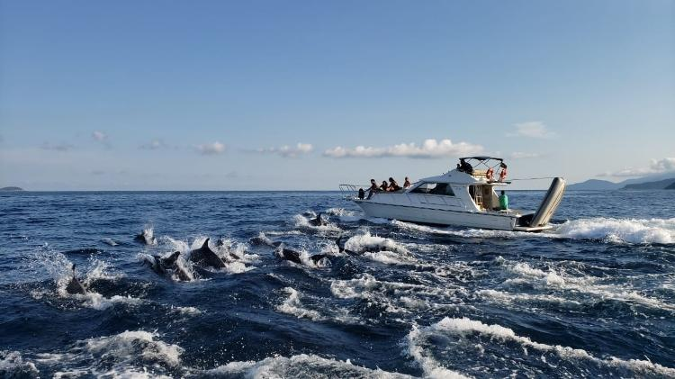 golfinhos nadam com lanchas 1