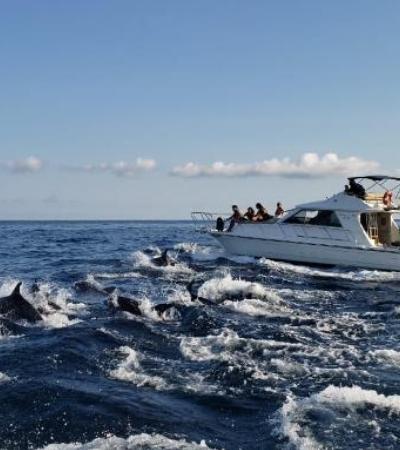 Golfinhos nadam entre lanchas e encantam turistas em SP; veja vídeo