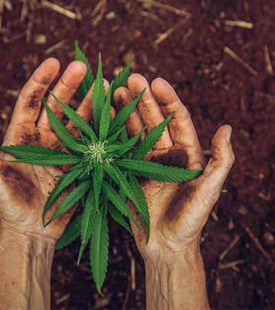 Havaí é o 26º estado dos EUA a descriminalizar a maconha