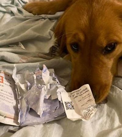 Mulher se livra de viagem ao epicentro do coronavírus após cachorro morder passaporte