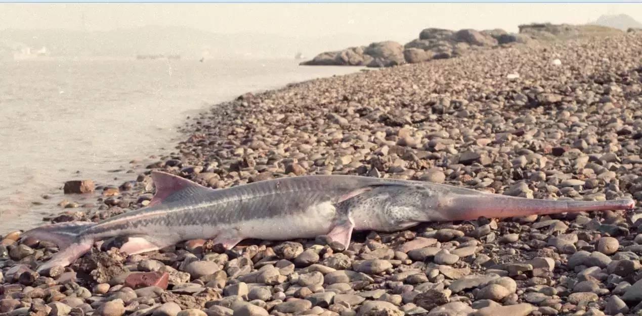 peixe 7 metros extinto 1