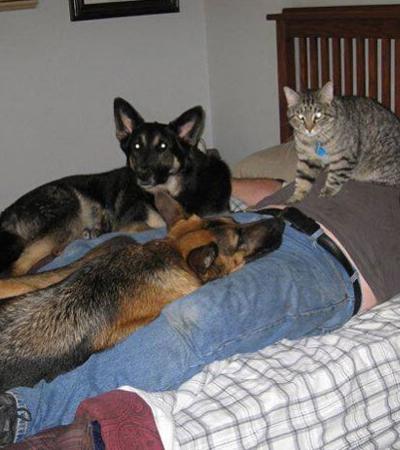 Eles não queriam animais domésticos, mas mudaram radicalmente de ideia
