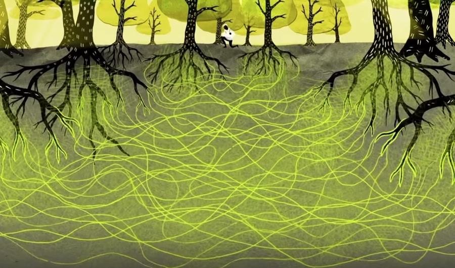 vida secreta das árvores 1