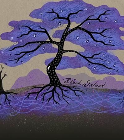 A vida secreta das árvores: vídeo explica como as plantas silenciosamente conversam entre si