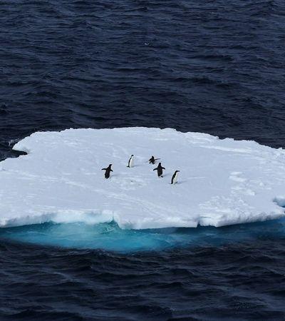 Antártica bate os 20 graus celsius e tem temperatura mais alta da história