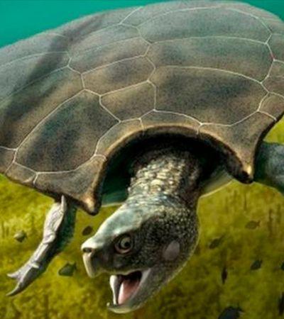Conheça a tartaruga do tamanho de um carro que viveu na região amazônica