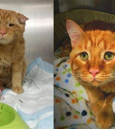 Comunidade reúne fotos de gatos antes e depois de serem resgatados para inspirar adoções