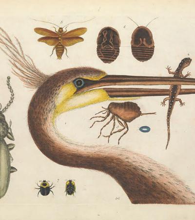 Biblioteca disponibiliza download de 150 mil imagens botânicas e de animais