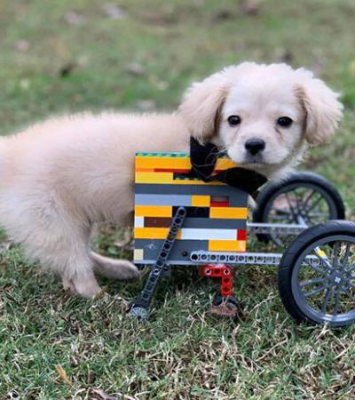 Garotinho constrói cadeira de rodas de LEGO para filhote resgatado