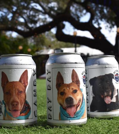 Mulher encontra cão perdido há anos graças a anúncio em lata de cerveja