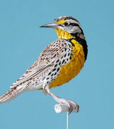 Artista cria esculturas de pássaros incrivelmente realistas com papel colorido