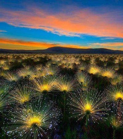Esta fotografia do Cerrado feita por um brasileiro venceu um concurso internacional