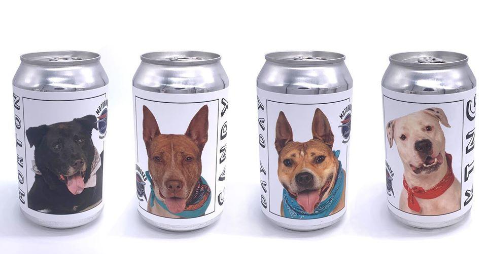latinha cerveja cachorro adoção