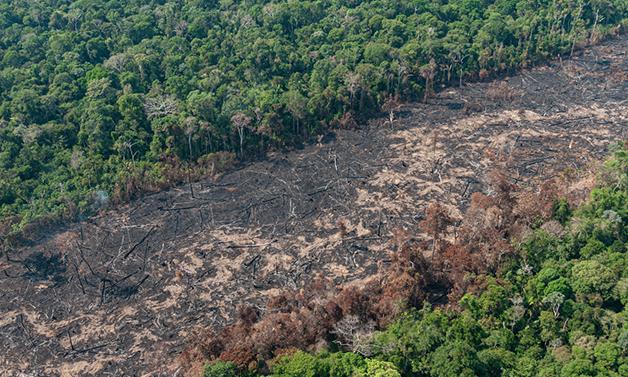 mapa desmatamento brasil 2