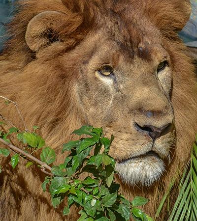 Rio de Janeiro transforma zoológico em bioparque sem jaulas