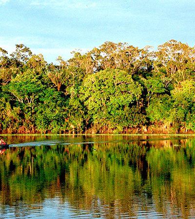 Em 15 anos Amazônia poderá não mais absorver CO2, diz estudo