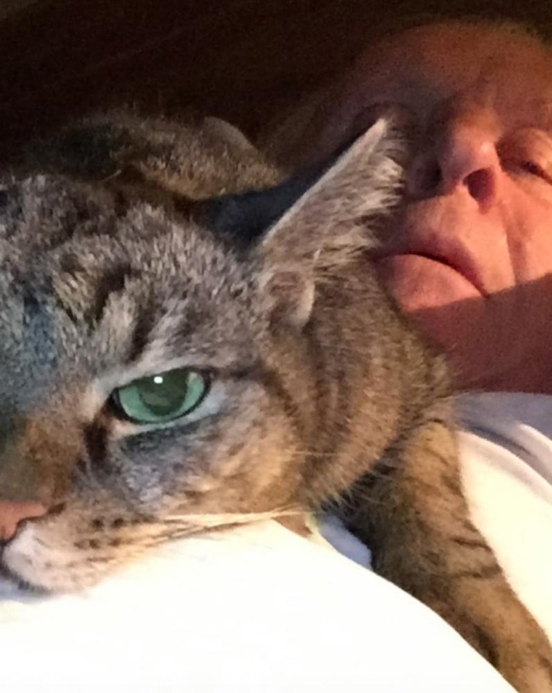 Anthony Hopkins piano gato 1