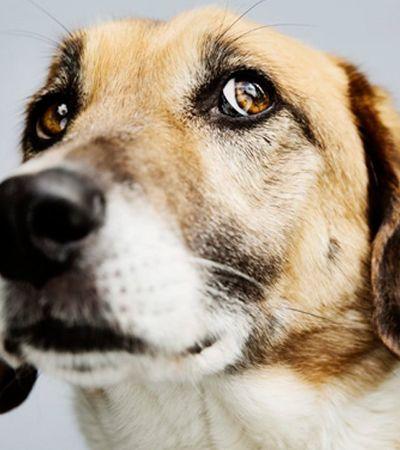 A ansiedade de seu cachorro pode estar associada com a raça, diz estudo