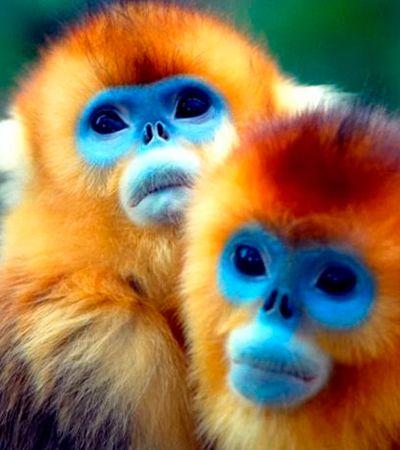 Cientistas divulgam lista de animais menos conhecidos ameaçados de extinção