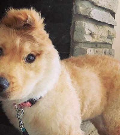 O 'cachorro unicórnio' que tem uma orelha no topo da cabeça e é uma fofura