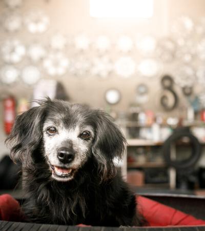 Eles também merecem amor: precisamos falar da adoção de cães idosos