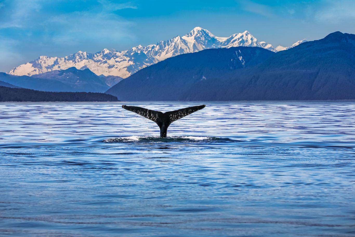baleias antártica 2