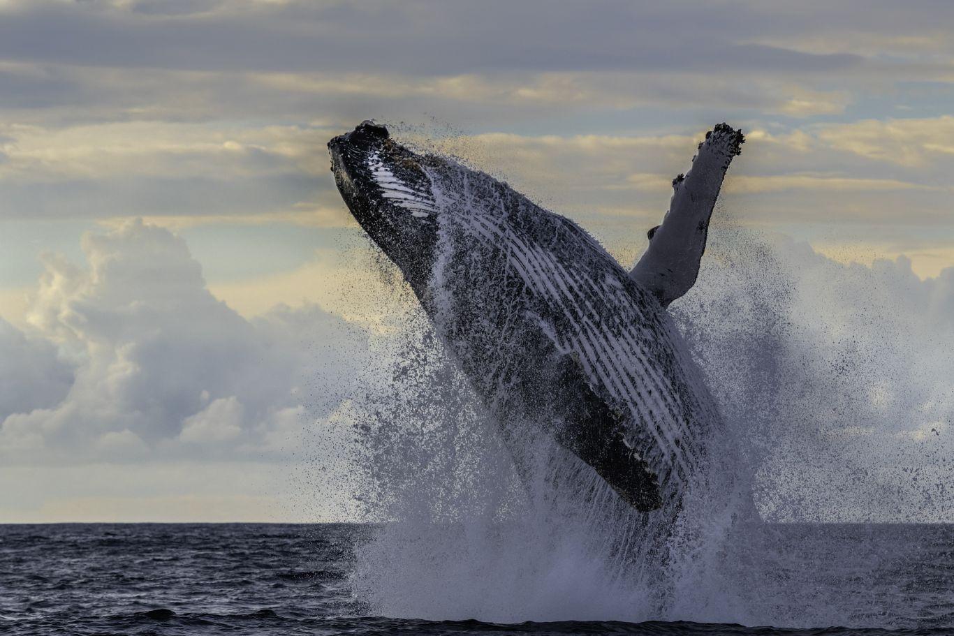 baleias antártica 3
