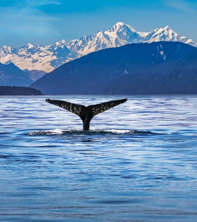 Dezenas de baleias azuis são vistas na Antártida pela primeira vez desde os anos 1980