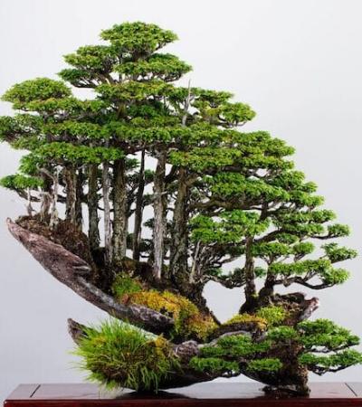 Mestre dos bonsais cria mini florestas que desafiam a gravidade