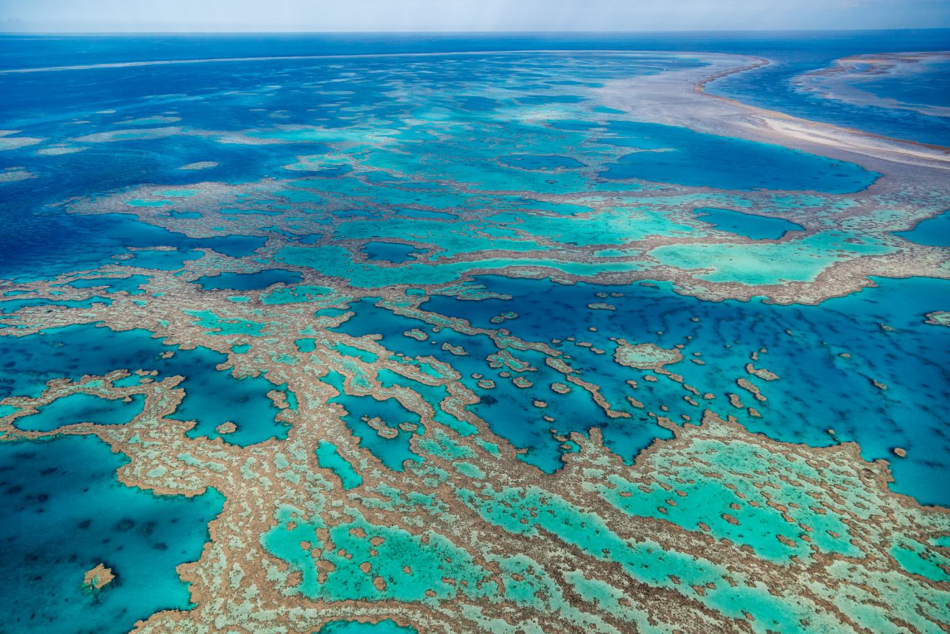 branqueamento barreira de corais 1