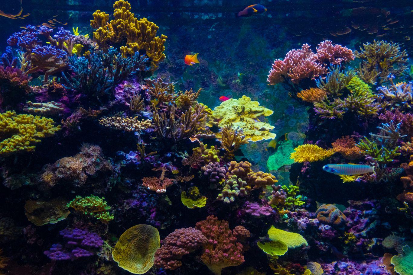 branqueamento barreira de corais 2