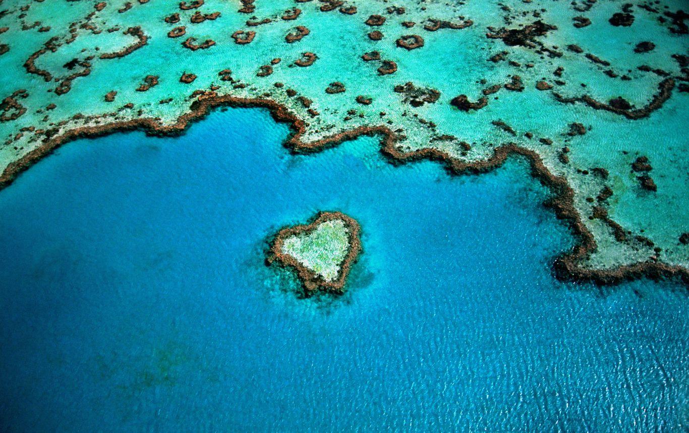 branqueamento barreira de corais 4