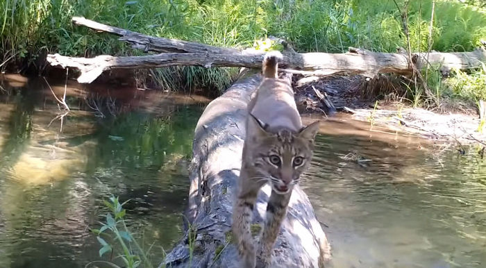 câmera escondida vida selvagem 1