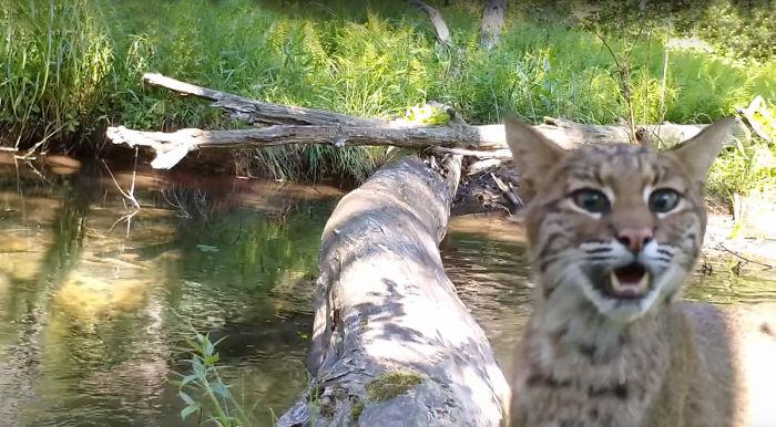 câmera escondida vida selvagem 2
