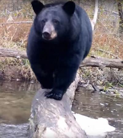 Homem instala câmera escondida para captar a vida selvagem em floresta da Pensilvânia
