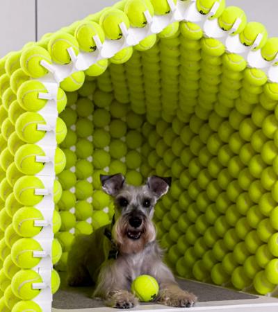 A inusitada casa de cachorro feita de bolas de tênis