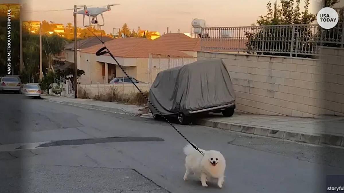 drone passear cachorro 1