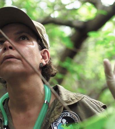 Mulheres na Conservação: web série conta trajetória de profissionais que lutam pelo meio ambiente