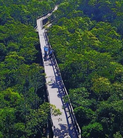 Parque suspenso em SP permite andar por copa das árvores em meio à mata atlântica