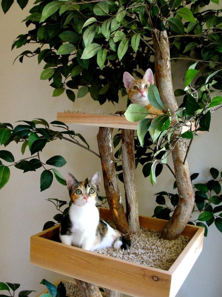 torres de gato árvores 2