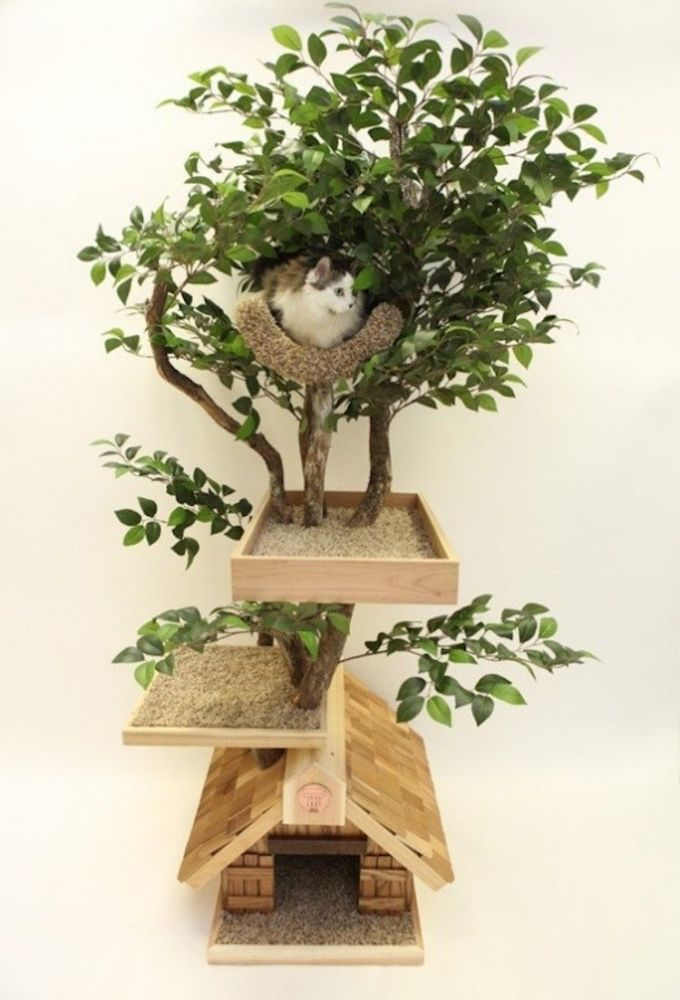 torres de gato árvores 3