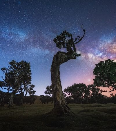 A mágica floresta de fanais da Ilha da Madeira com árvores de 500 anos