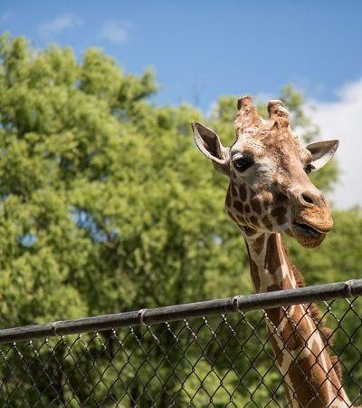Lei proíbe novos zoológicos e aquários em SP e prevê devolução de animais à natureza