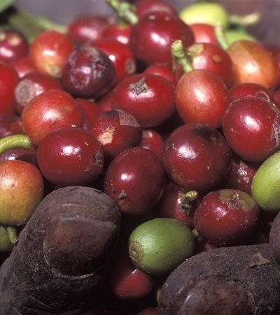 Seita religiosa e cafeicultor com selo de qualidade integram nova lista do trabalho escravo